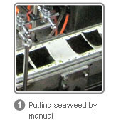 Putting seaweed by manual